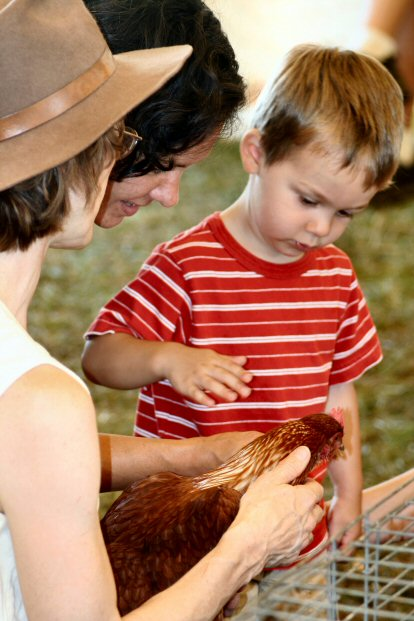 Mazen Ershied of Leesburg VA, the grandson of Brenda and Paul Smith of Collegeville, makes a nw friend in the poultry barn.